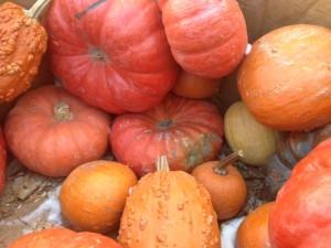pumpkin puree cooked sous vide